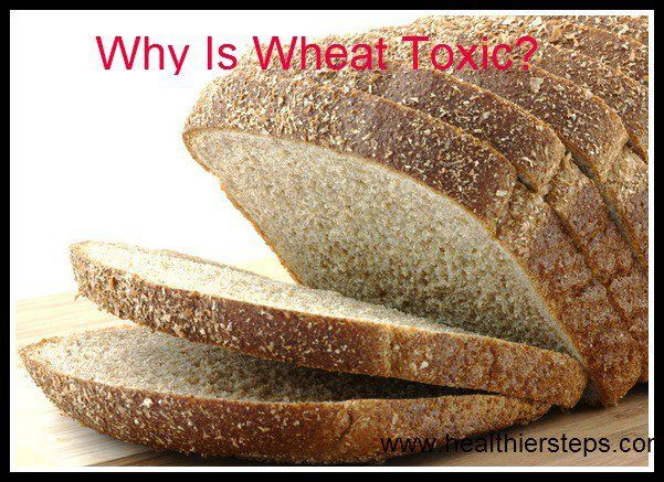 Why Is Wheat Toxic