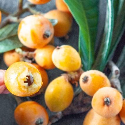 Loquat Fruit