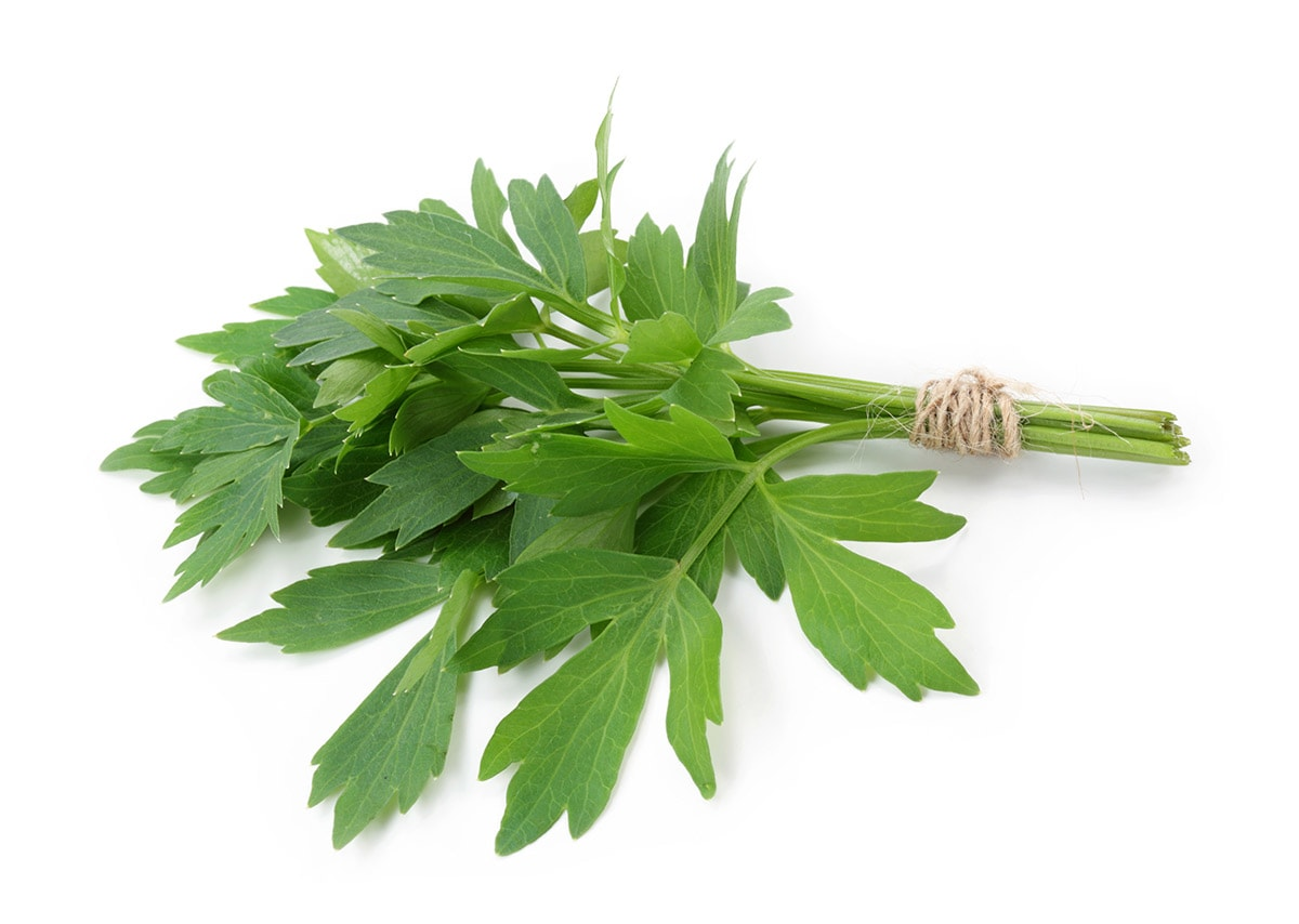lovage on white background