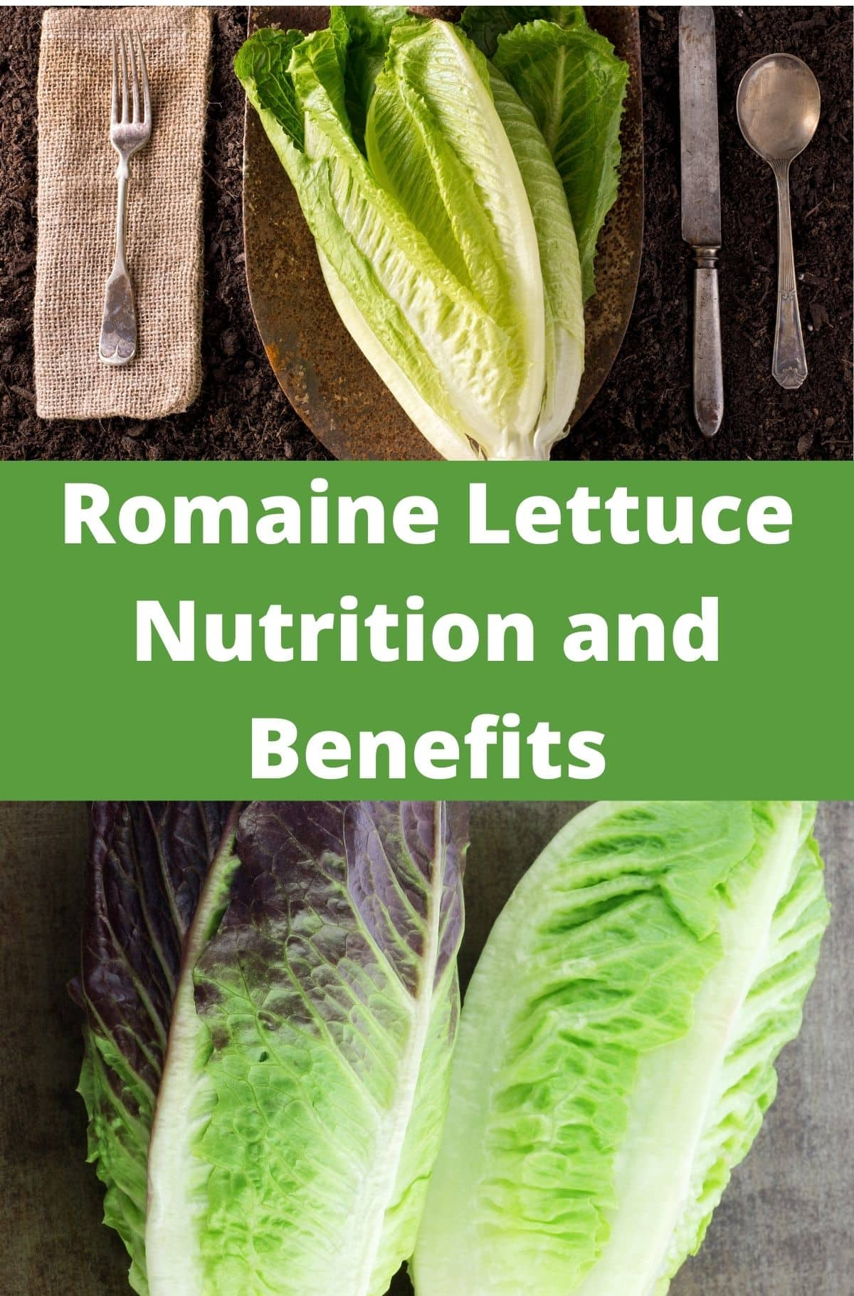 Romaine Lettuce Nutrition and Benefits