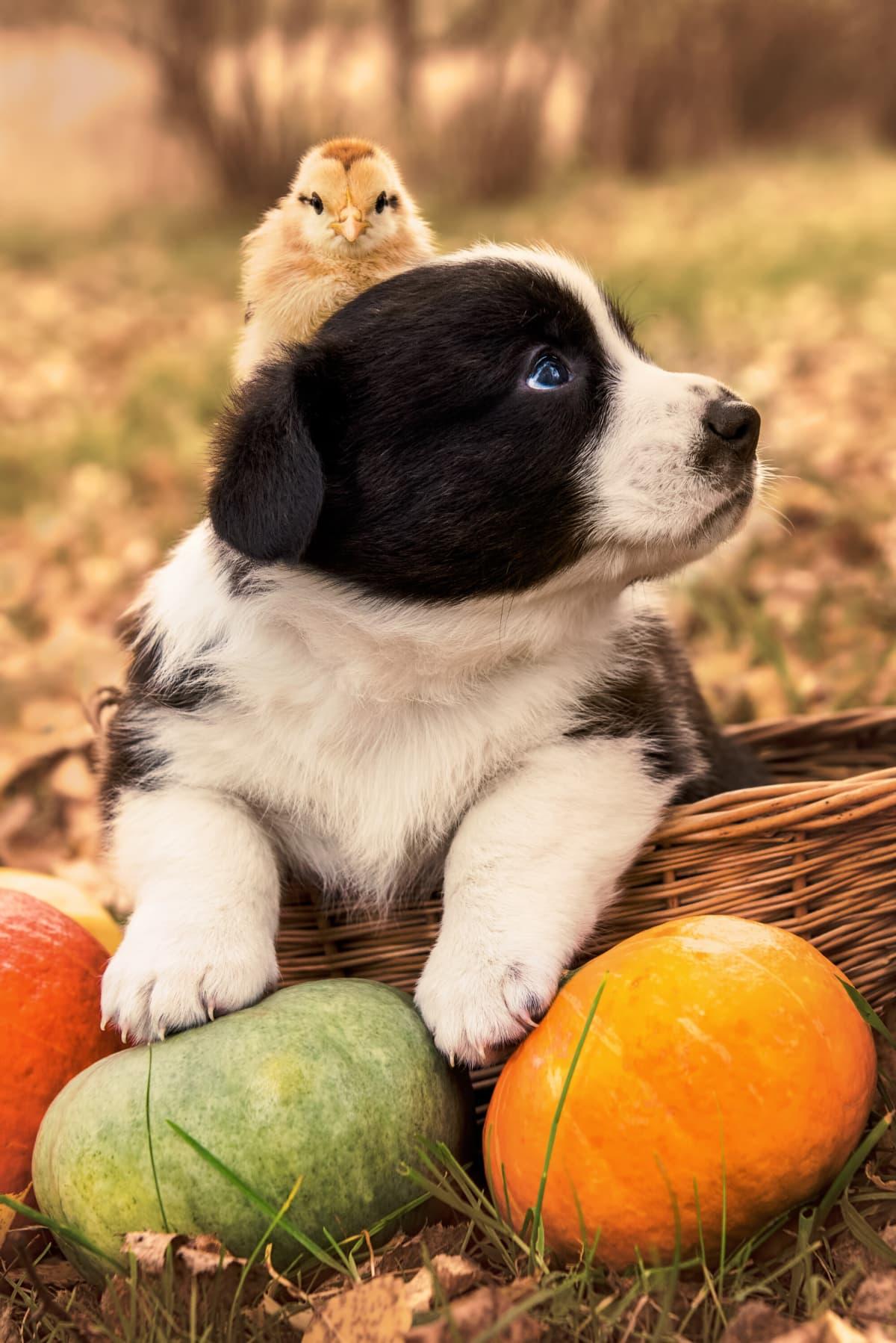 Pet Safe Thanksgiving Tips